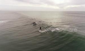 Magical moment dolphins jump alongside surfer off LA coast