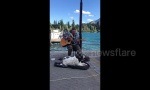 Dog sings along with his busking human