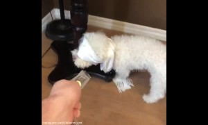 """Dog attempts """"Bird Box Challenge"""" with hilariously cute results"""