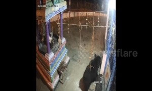 Boozing bear visits locked Indian temple looking for a swig of lamp oil