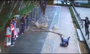Man walking through a park struck on the head by falling tree branch