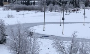 Good Samaritans Make Safe Ice Crossing for Moose