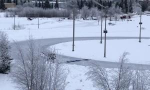 Good Samaritans Make Safe Ice Crossing for Moose
