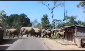 Locals panic as herd of 30 elephants marches through Indian village