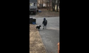Touching footage of a dog greeting his owner off of the school bus