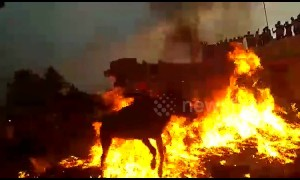 Cattle and their owners run through flames in south India for Hindu ritual