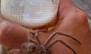 Creepy Crawly Joins in for a Cold One
