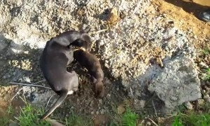 Puppy Rescued While Mother Watches Anxiously
