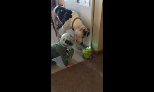 Baby and his doggy best friend confused by toy dinosaur