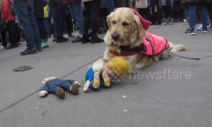 """Donald Trump doll mauled by """"vicious"""" hound at London Women's March"""