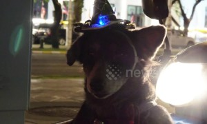Dog with flashing party hat sits in motorcycle basket