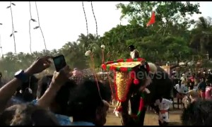 Agitated temple elephant in India temple runs amok amidst devotees during popular festival