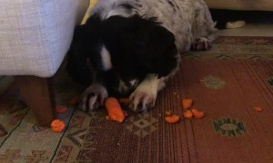 How Not to Eat a Carrot