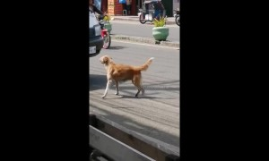 Panic-stricken mother dog attempts to stop cars after her puppy was ran over