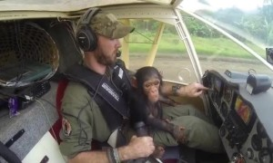 Great teamwork saves baby chimp from poachers