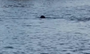 Dog and Dolphin Swim and Play Together