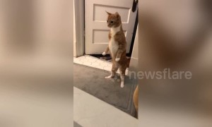 Startled cat stands on hind legs and stares at fizzling bath bomb