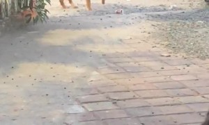 Precious Pooch Desperately Searches for Owner