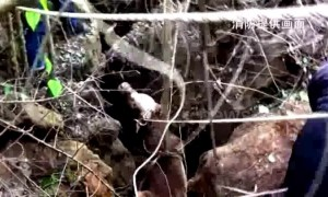 Firefighters rescue 450kg buffalo trapped in deep hole
