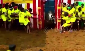 Bull at event in south India rips off a man's shorts then runs for it