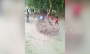 Rampaging rhino rushes Indian harvest festival, sending villagers up trees