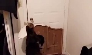 Dog decimates door in order to go outside