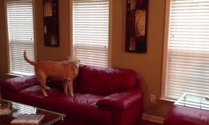 Clever dog manages to find treats hidden around the house