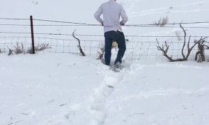 Saving a Deer Stuck in the Snow