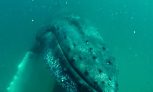 Scary moment shows whale smashing diver's camera