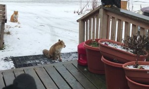 Alaskan Wildlife Greets Woman at Front Door