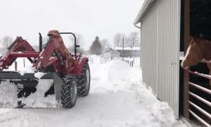 Dino Driver on Snow Duty