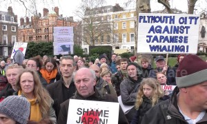 Anti-whaling activitists march to Japanese embassy in London