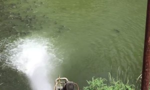 Fish Flock to Fresh Water