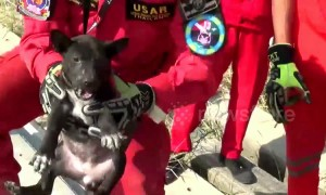 Four puppies rescued after spending two days trapped under concrete electricity posts