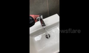 Tap makes bizarre screaming noise when turned on