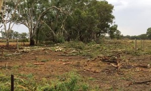 Aftermath of Mini Tornado in Strathmerton