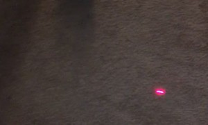 Cat Claws Carpet Chasing Laser Pointer