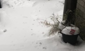 Doggo Does Handstands in the Snow