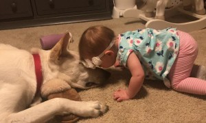 Dog Returns Kisses from Infant Girl