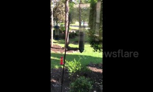 Not so agile! Squirrel goes for a spin on bird feeder
