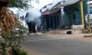 Rogue elephant returns to search for family after being relocated
