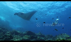 Stunning footage shows freediver encountering huge manta ray