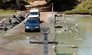 Huge crocodile holds up traffic to cross road in Australia