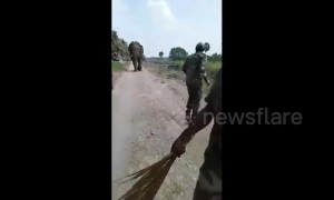Officials have close encounter with rogue elephant
