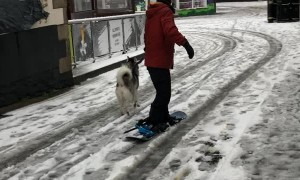 Doggy Powered Snowboard