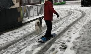 Doggy Powered Snowboard
