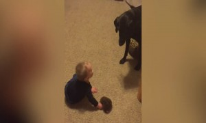 A Boy and his Dog play Together Wonderfully!