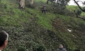Plane Fuselage Lands in Suburban Backyard