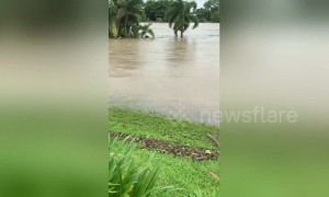 Aussie flood victim spots 7-foot crocodile on her front lawn