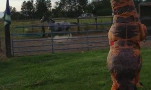 Horse Horrified by Approaching T-Rex
